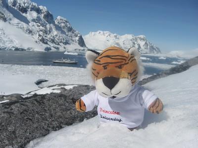 """Princeton Journeys mascot """"PJ"""" in Antarctica - Andrew Gossen"""