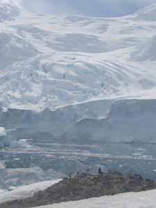 Glacier and penguins, Meko - Andrew Gossen