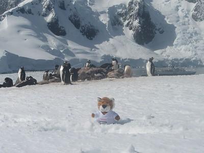 "Princeton Journeys mascot ""PJ"" with the penguins - Andrew Gossen"