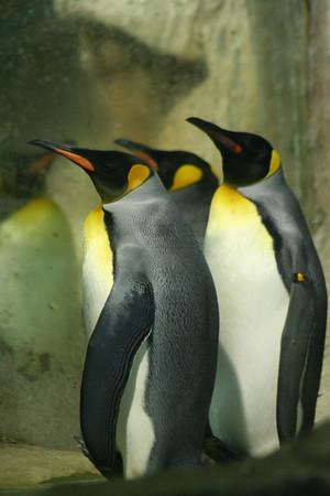 Visiting Jurong Bird Park