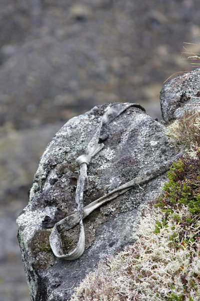A nearby climb looked like it had been done, but perhaps only once by the look of this anchor.