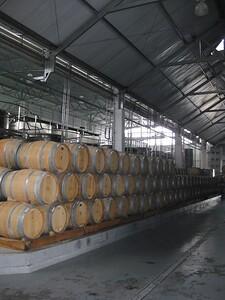 Barrels of Vina Casas del Bosque - Kimberly Collins