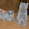 08-05-08 Kittens-5
