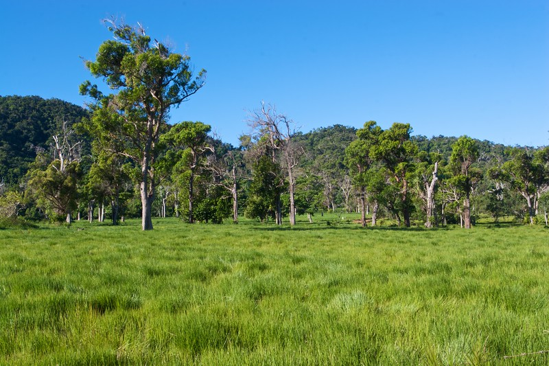 Grassy farmland on Dunk Island.