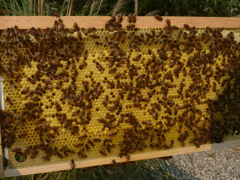 red hive