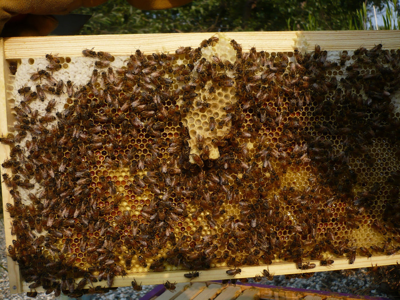 purple hive