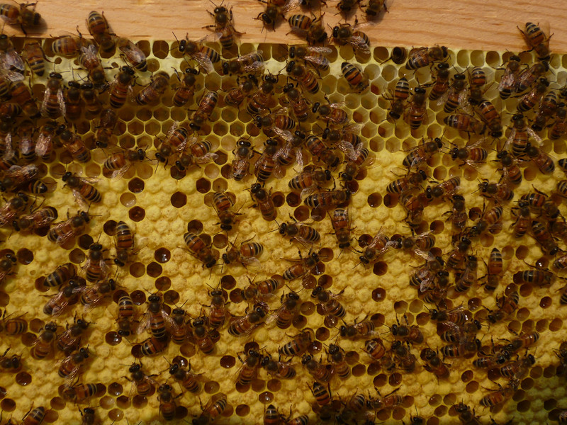 red hive - see the brood!!