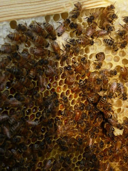 Queen??? purple hive