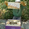 1st hive, 2nd frame --- I am inspecting all frames for capped brood or anything I can find.....