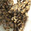 wall swarm