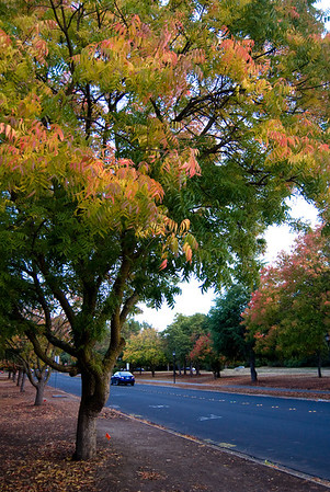 Bowdoin, Stanford