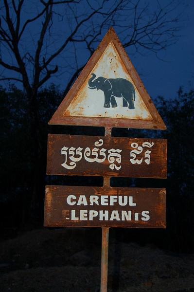Beware elephants!
