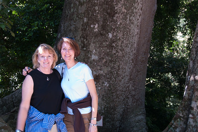 Paula and Gail in front of a big Cepa (Kapok) tree.