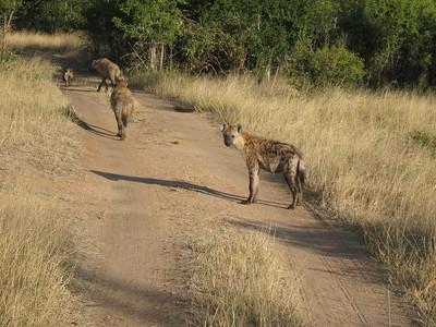 Hyena family  - Kimberly Collins