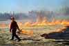 A firefighter operates the drip torch, setting the fields ablaze.