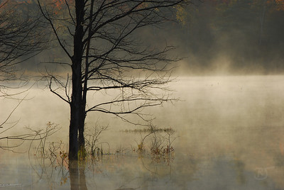 Day 236 - Morning Mist at Kearney Lake  I visited Kearney Lake early this morning.  The mist was rising off the with Autumn colors in the background.  As I was walking the along the lake, I sat on a rock to watch the trees get brighter, and brighter.  When three ducks landed behind me, and then came within a foot of the shore where I sat.  Eventually, coming round, right in front of me and to my surprise started to come on shore about 2 feet away from me.  I never thought I'd say, backup you're too close for my 300mm.. :)    I was hoping to see one of the beavers in the mist, they were there.  I usually would hear them after they submerged.  Checking me out I guess.  Saw lots of Chick-a-dees, Finches, and Sparrows.  A sparrow just about walked into me before realizing I wasn't a tree. :)   I added some more photos from the morning out. (here)  Oct 12 2008
