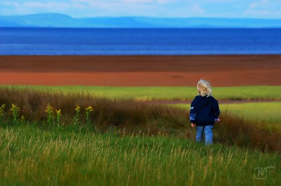 Day 205 - The Little Wanderer  The day started out dreary and rainy. Pat and I debated whether to head out to Conrad Beach for the 5:30am sunrise, but it was pouring rain, so we left a little later.  When we arrived at the beach the sun was coming out and it was beautiful. We were lucky enough to spot and photograph our first Piping Plover (a very rare little bird that is only found in one or two pairs on a few beaches in Nova Scotia - placed on the endangered list) mixed in with a lot of Sanderlings and Sandpipers.  Later on we met up with Melanie and Barb and headed out to Canning and Medford (Bay of Fundy shore).  We spotted a few Bald Eagles and hawks along the way.  At Canning, we met a gentlemen walking with his  two white dogs who showed us the way along the paths to the grassy mud flats (clay-like soil) and beach.  I think the dogs just came along to show how well they can play in the mud... white plus red mud clay =  not a pretty sight.. hehe  On our way back this  little girl passed us by.  Only a quick hello and a shy smile and she was on her way - all the while having a wonderful discussion with and singing to  her little lamb doll .  You see she had places to go, people to see, and things to do.   The late afternoon sun  lit up the sea grass and red mud flats.  On the far shore is  Blomidon's North Mountain.  Sept 10 2008