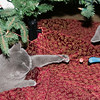 12-02-08 Clyde & Bonnie under the tree