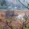 12-03-08 Spider Web