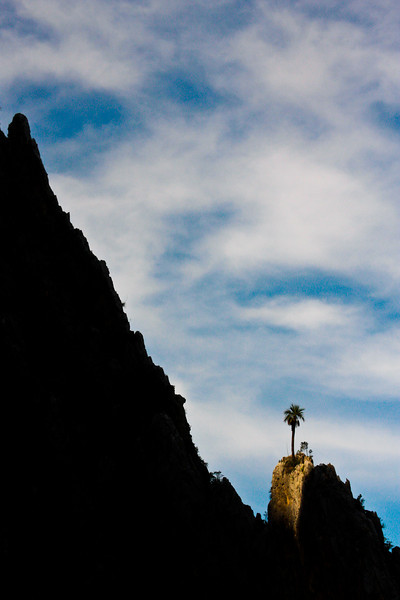 A beautiful lone palm tree stands high on a ridgeline overlooking the scenery.