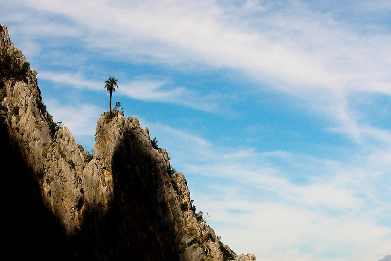 Blue sky and amazing ridges highlight a lone palm tree overlooking Hidalgo.
