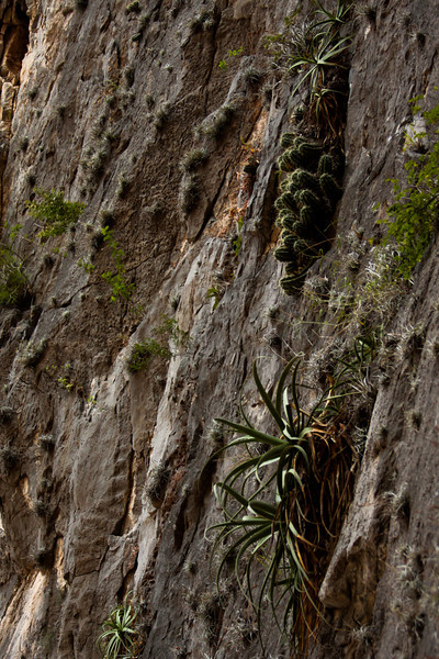 Various types of plants thrive on the vertical walls of the canyon.