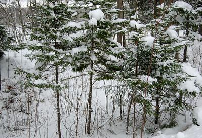 Kearney Lake Trail - January 2008