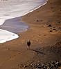 02-28-08 Muir Beach Walker