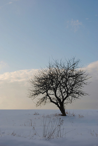 Lone tree - Oakfield, N.S. <br /> <br /> January 06, 2008.