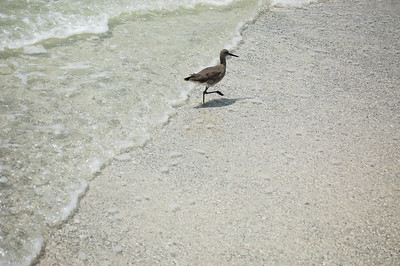 Wanderin' Bird