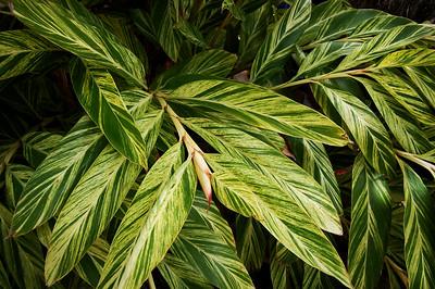 Stripey Leafy Greens