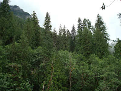 Mountain Loop Highway in the Mount Baker-Snoqualmie National Forest