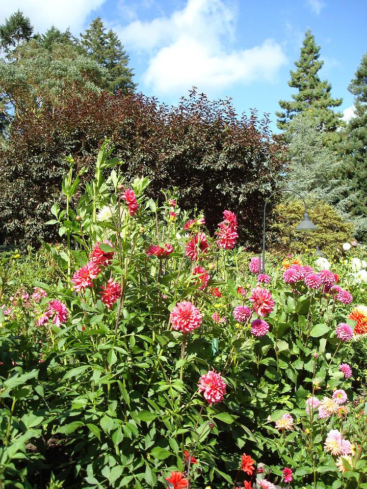 Butchard Gardens