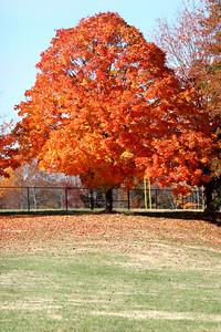 Fall Campus Shots; 2008