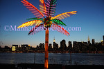 A palm tree grows in Queens