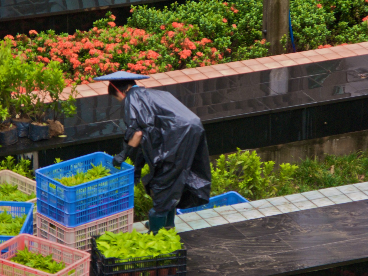 Gardening • Hong Kong central.