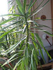 Another of the big plants - can be inside or outside!