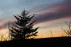 Sunset<br /> <br /> Jan 13, 2008