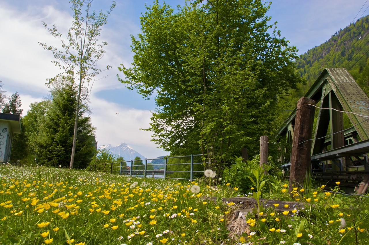 A meadow in Interlaken.