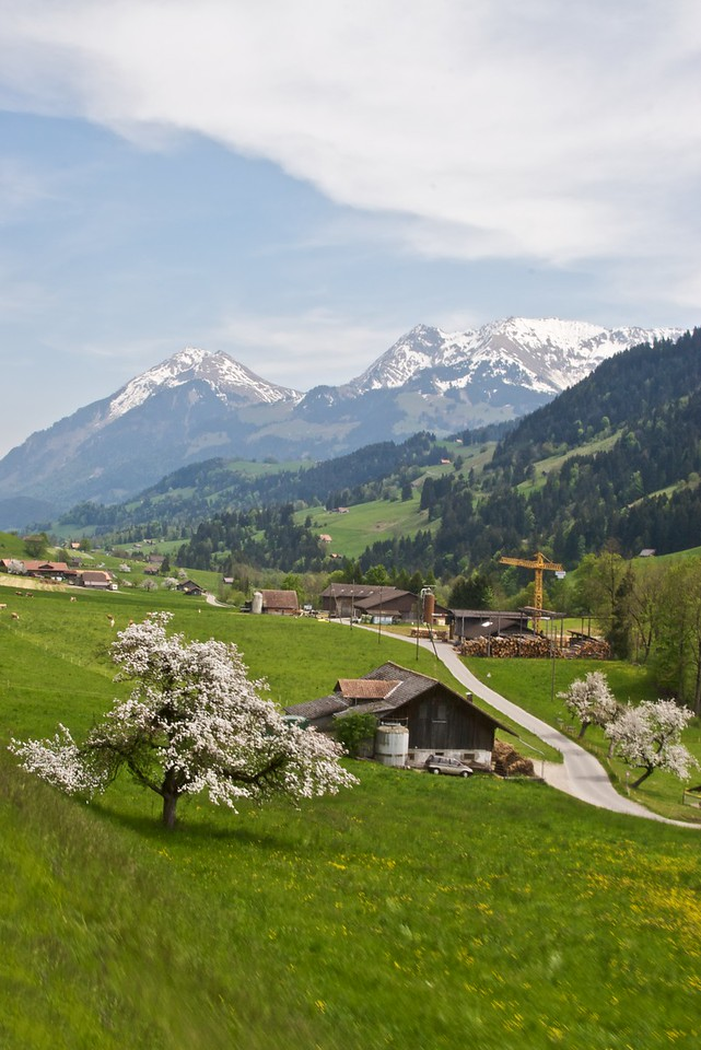 Snow on the mountains, blossom on the trees in the Bernese Oberland.