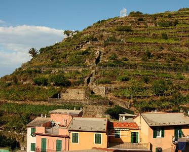 Manorola vineyards.