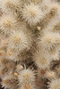 The sharp needles of the Teddy Bear Cholla are almost fuzzy enough to seem very inviting.