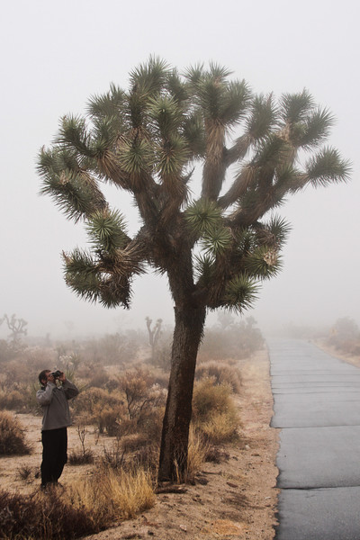 Kelsey shoots an up close perspective of a decent sized Joshua Tree beside one of the park's narrow roads.