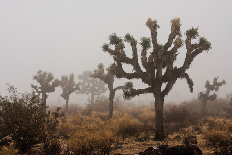 The wildly branching arms of the joshua trees make walking through this desert a truly surreal experience.