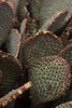 Cactus grows thick in patches across the desert.