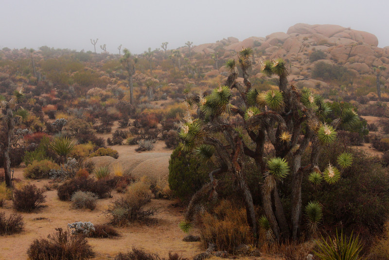 Joshua Trees adorn the landscape as clouds move in and out around us.