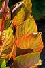 06-06-08 Xmas Leaves