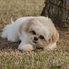 08 02-24 Doggie Olympics 09