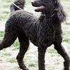 08 02-24 Doggie Olympics 17