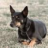 08 02-24 Doggie Olympics 15